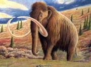 mamut_lanudo